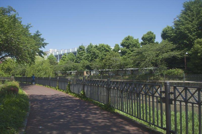 いたち川沿いの遊歩道