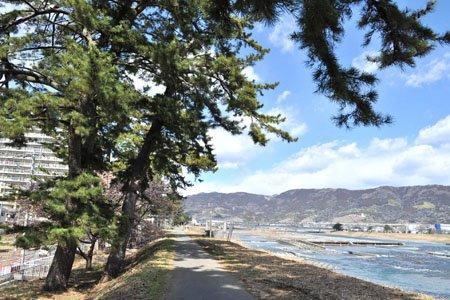 酒匂川沿いの土手