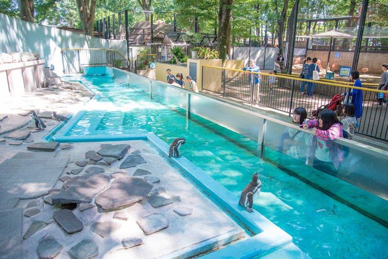 動物園に詳しくなれるイベントなども開催