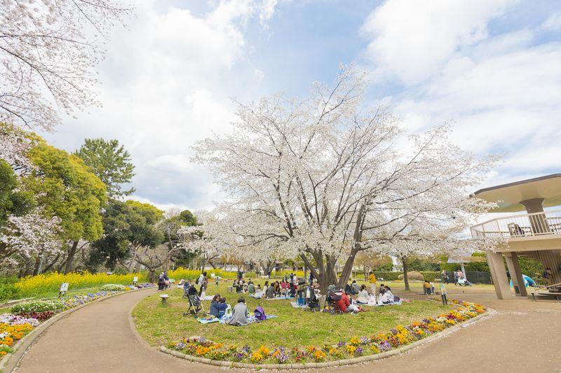 春には桜が咲き花見も楽しめる