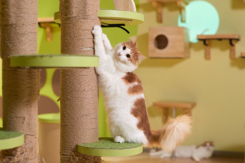 猫好きにはたまらない「キャットパラダイス」
