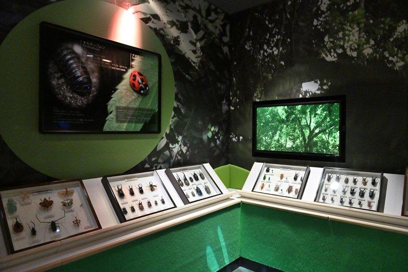 貴重な昆虫標本も展示されている「メガバグス」