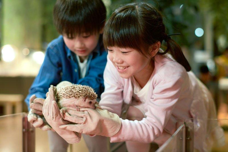 小動物たちにたくさん出会える「アニマルスタジオ」